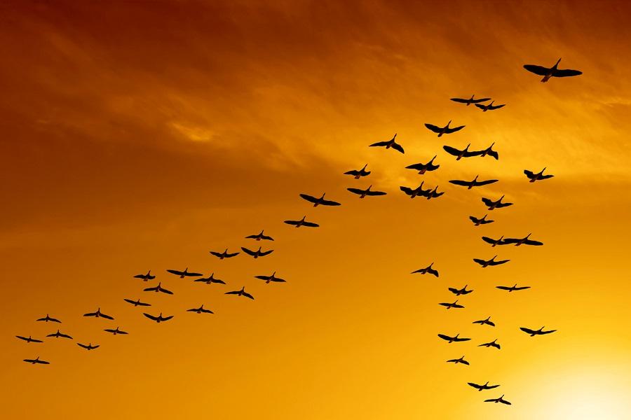 Migratory bird species face extinction, need global protection: UN treaty head