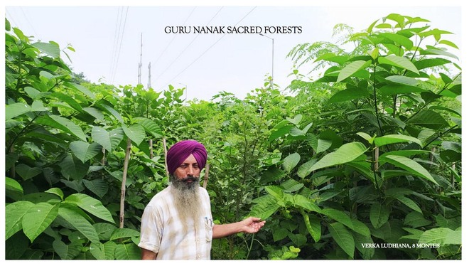 EcoSikh's Guru Nanak Sacred Forests: A reason to cheer for Ludhiana district