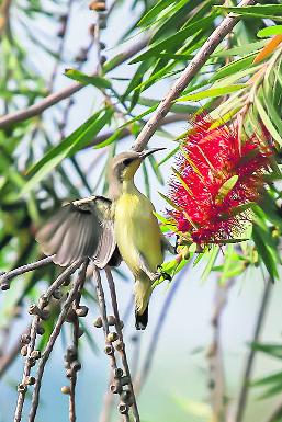 Theh Kanjla village a birder's paradise