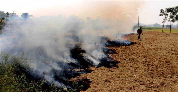 Air quality management commission should consider use of bio-decomposer for stubble: Rai