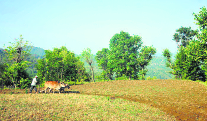 Spectre of drought looms large over Himachal Pradesh