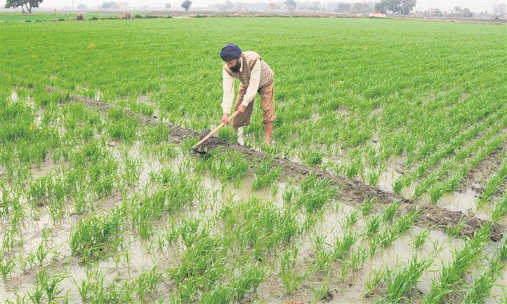 Debt on farm labourers in Punjab four times their annual income, claims study