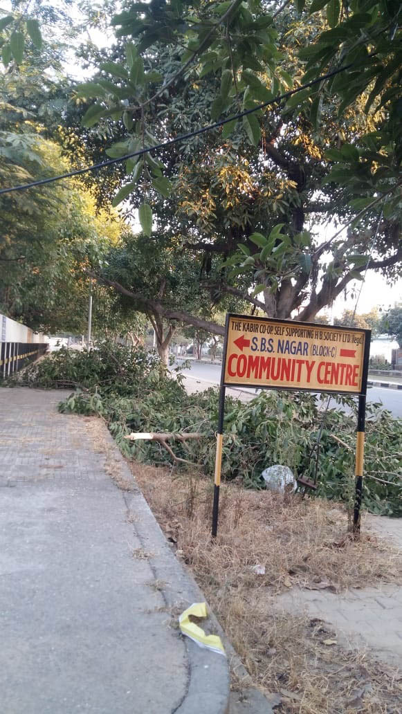Ludhiana Improvement Trust colony residents oppose indiscriminate cutting of trees