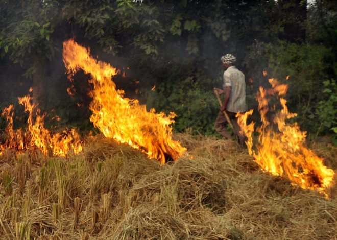 More experiments needed for straw mgmt: Officials