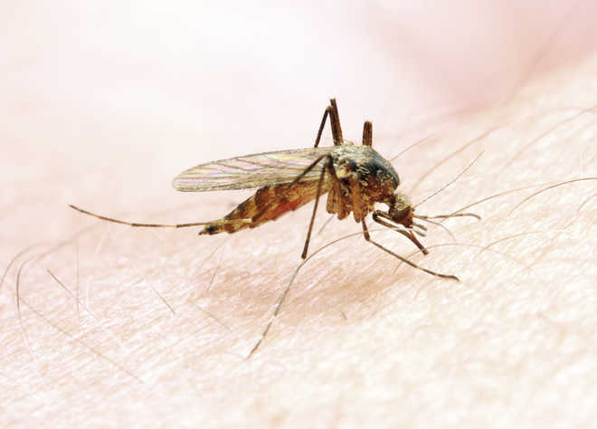 India recorded largest reduction in malaria cases in South-East Asia from 2000-2019: WHO