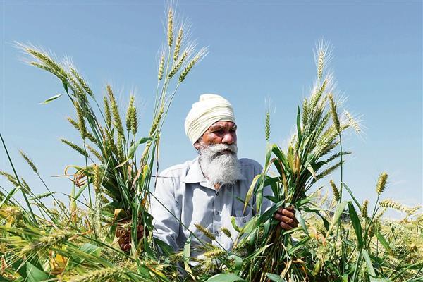 Glaring flaws in farm laws