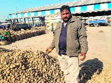 Potato rates crash in Haryana, new agri laws of no help