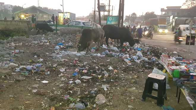 Littering of plastic bags harms stray animals