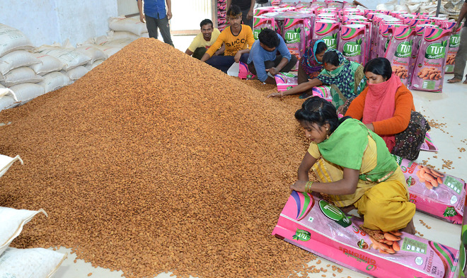NRIs send 30 quintal almonds for protesters