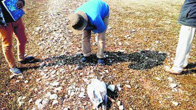 Death of migratory birds sets off alarm in Himachal