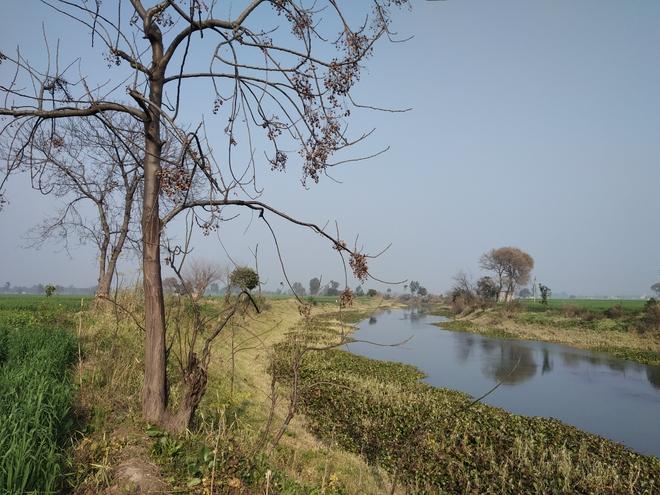 Water hyacinth not the only threat to Kanjli biodiversity