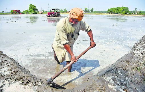 No respite in sight for Punjab farmers