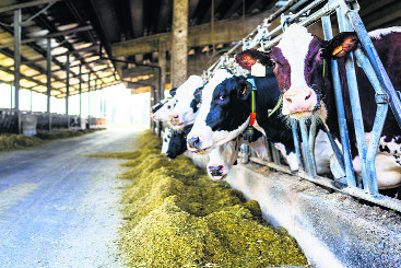 Punjab truly land of milk, tops the chart