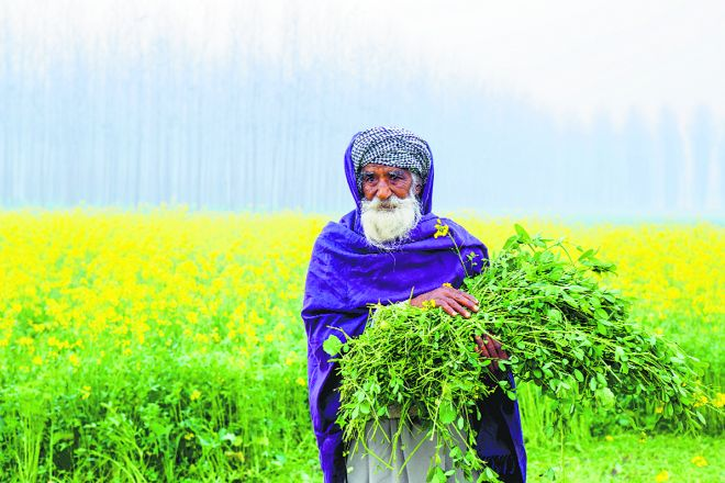 Punjab Budget: No new schemes for crisis-ridden agriculture sector