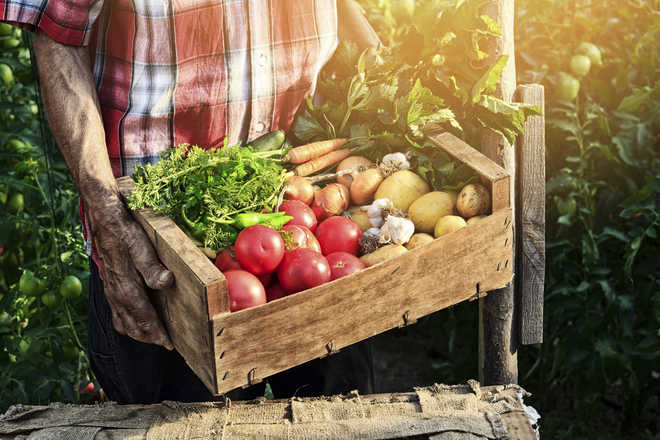 Have onions: Desperate to return home in lockdown, man turns into vegetable trader