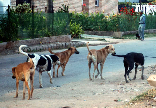 Mauled by dogs, six-yr-old girl dies for want of treatment