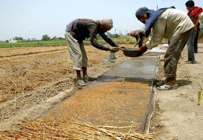 Opt for direct paddy sowing from June 1: Punjab Agriculture Dept to growers