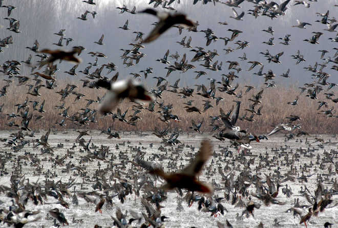 DRI busts wildlife smuggling syndicate, seizes 22 exotic birds