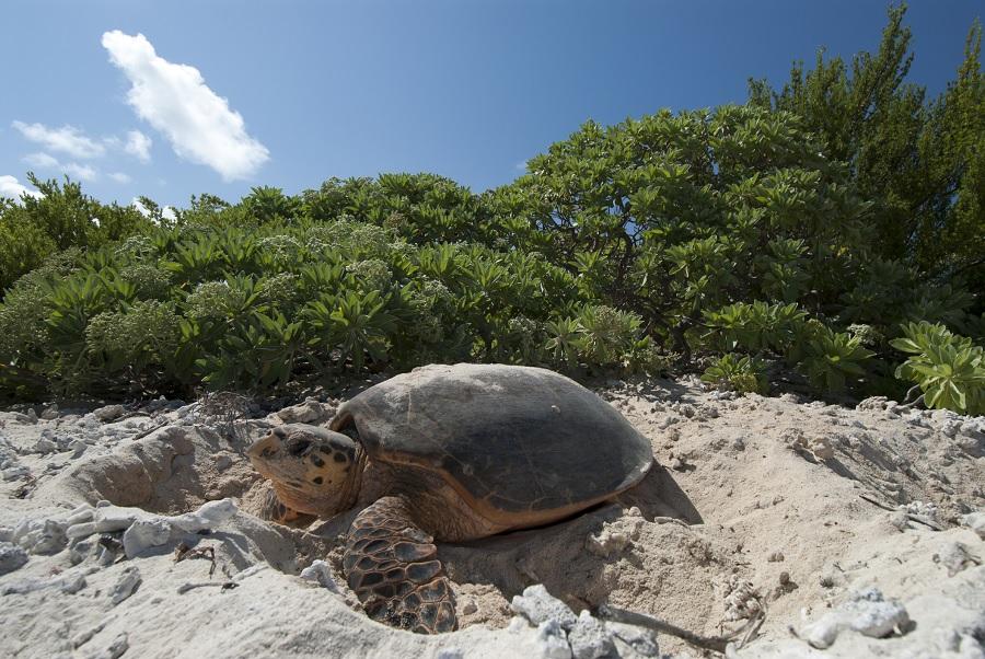 Rare turtle lays eggs on tourist-free Thai beach