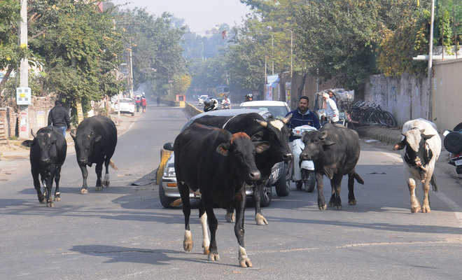 Ordinance to prevent cow slaughter in UP