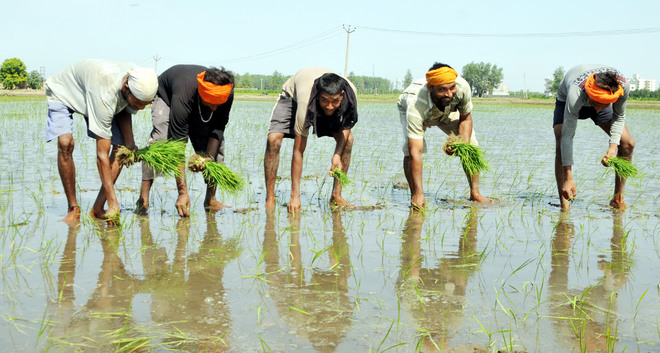 Farmers give thumbs down to direct seeding