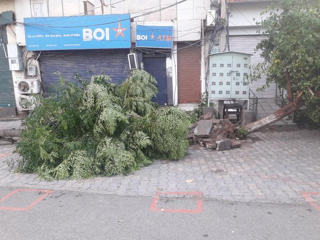 BRTS track waterlogged as heavy rain, strong winds lash Amritsar