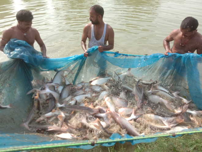 Protect fish pond from stock loss during monsoon: Expert