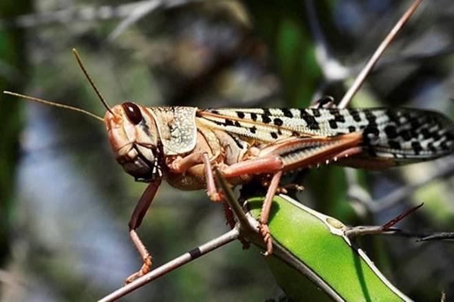 Spraying water to get rid of locust