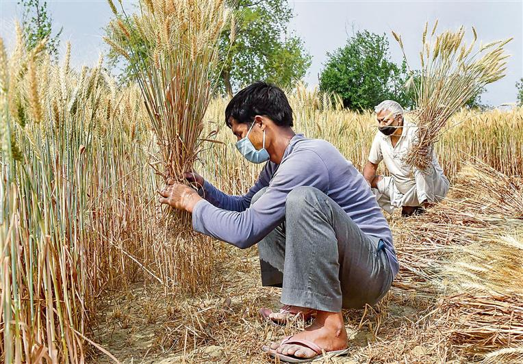 Food security must not lull us into complacency