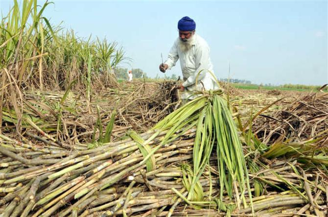 Cabinet approves increase in sugarcane FRP by Rs 10 to Rs 285 per quintal for 2020-21