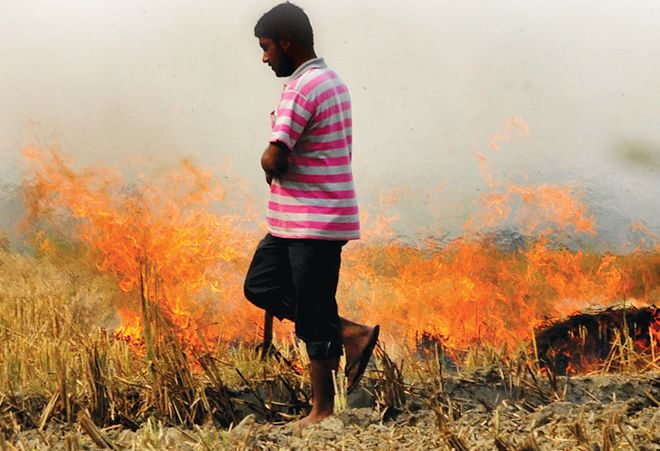 No compensation, Malwa farmers to burn stubble