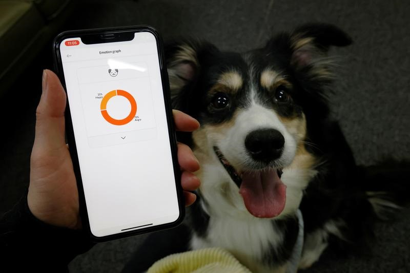 Smart dog collar tells owners what's in a bark