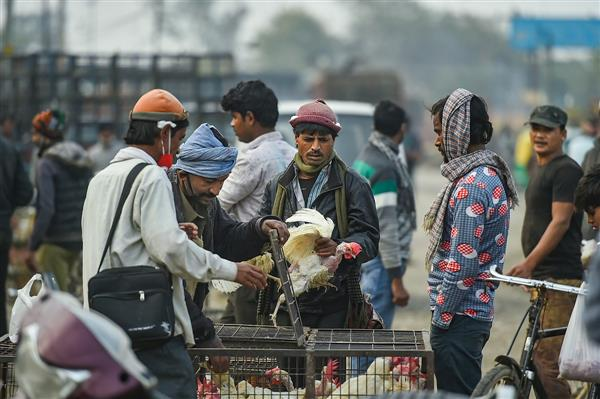Samples from Patiala poultry farms test negative for bird flu