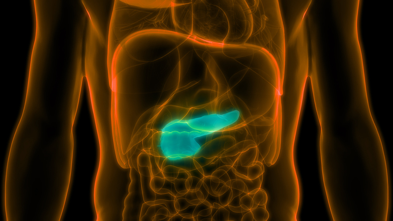 Novel protein may improve safety of therapy for pancreatic cancer