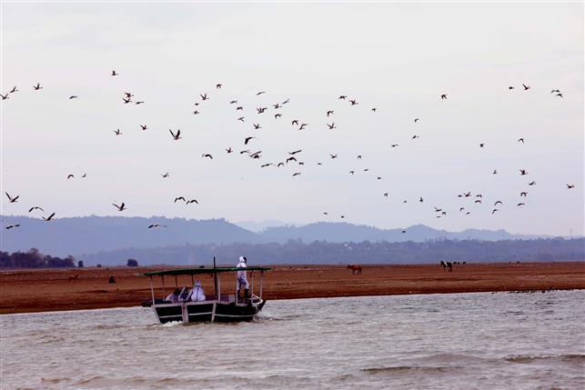Avian flu: Pong wetland found fit for fishing
