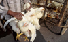 Bird flu: 'Noticeable dip' in chicken sales, say shopkeepers in Delhi