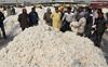Pvt players buy cotton above MSP in Punjab, trigger CCI's 'ouster' from market