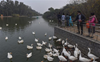 Bird flu: Delhi's Sanjay Lake declared 'alert zone' after 17 more ducks found dead
