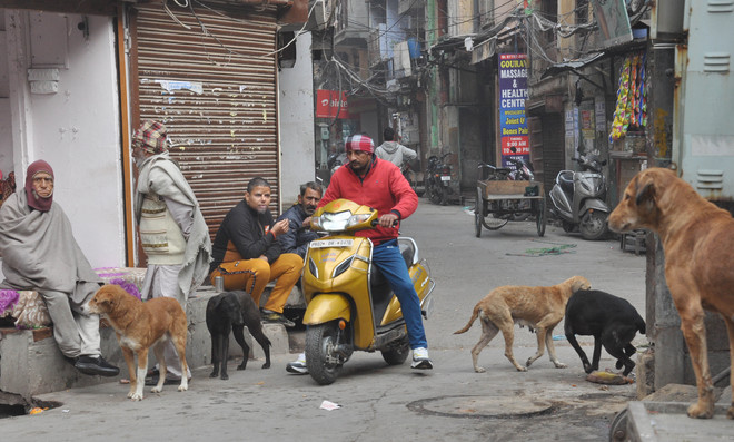 Helpless, father of 4-yr-old girl is full of rage for stray dogs
