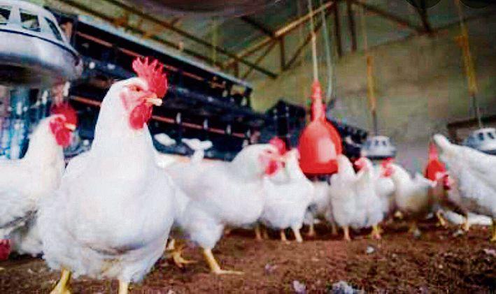 Dera Bassi in Punjab reports bird flu cases