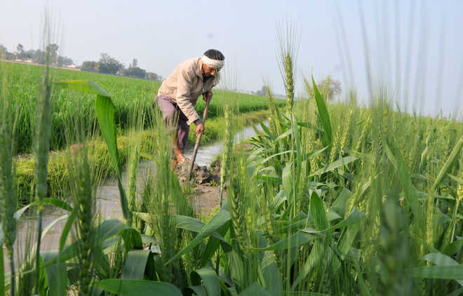 Crop productivity counts