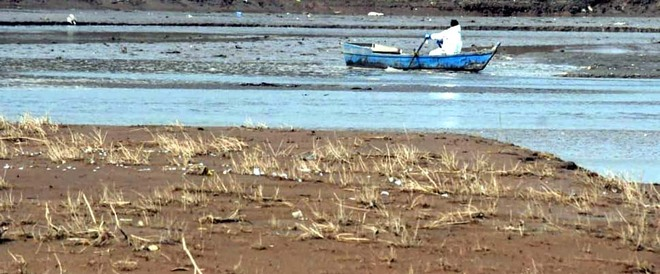 Death toll of birds at Pong wetland reaches 4,637