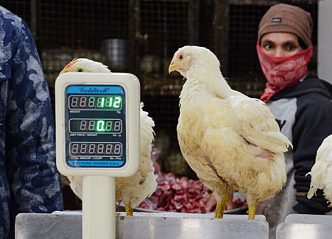 Rs 500-cr biz down by half in 5 days: Poultry farmers