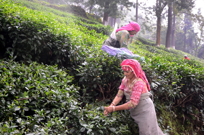 Removal of clauses which allow tea garden land sale proposed