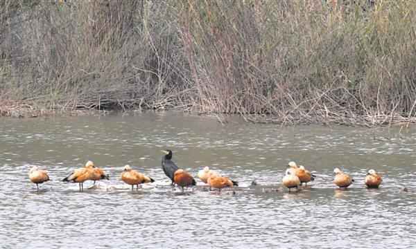 Chandigarh bird toll up, 4 more found dead