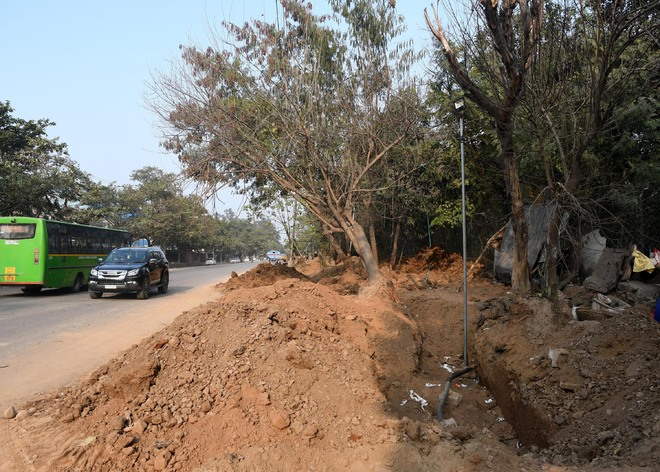 Chandigarh to axe 39 trees for road widening