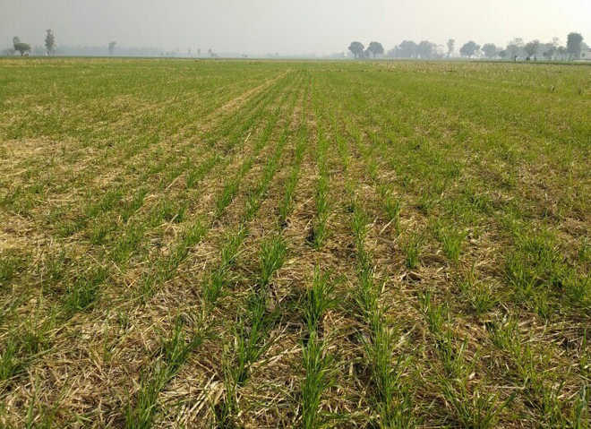 'Happy seeder a boon for farmers'