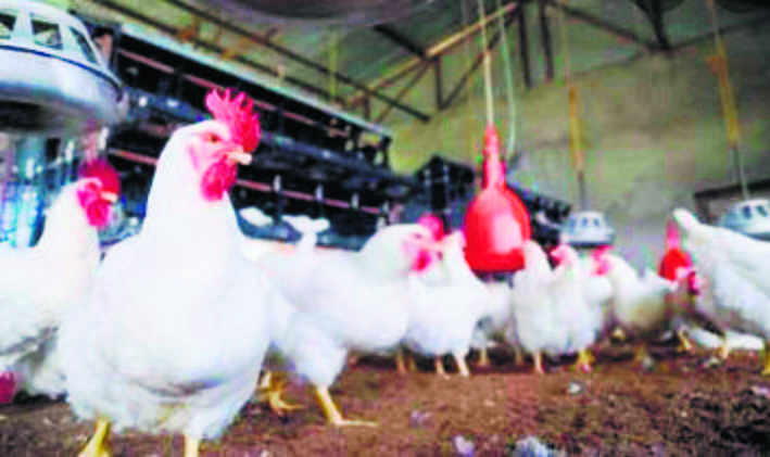 Dera Bassi poultry farmers worried