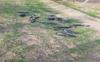 22 crows found dead near Abohar