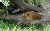 Ludhiana Zoo to promote animal adoption